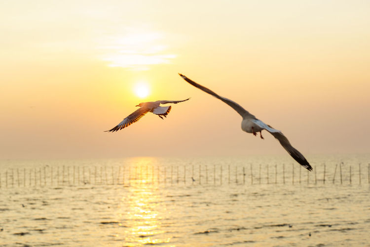 Bird flying over sea against sky during sunset
