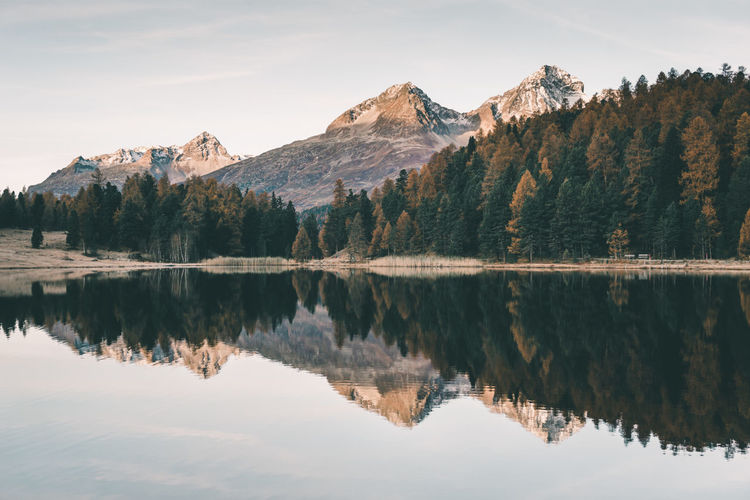 Morning reflection at the mountain lake in Sankt Moritz, Switzerland Alps Engadin Forest Lake Landscape Mountain Mountain Range Mountain View Mountains Nature No People Outdoors Reflection Scenics Schweiz St. Moritz Suisse  Sunrise Swiss Swiss Alps Switzerland Tranquility Travel Tree Water