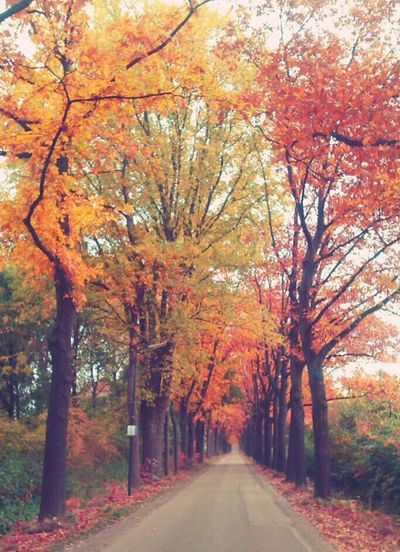 Autumn Nature_collection Tree Holland