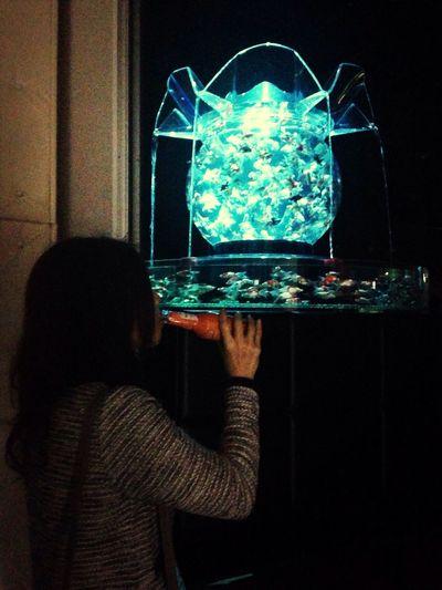 アートアクアリウム~夜は金魚と夜景を楽しめるBARにもなる。
