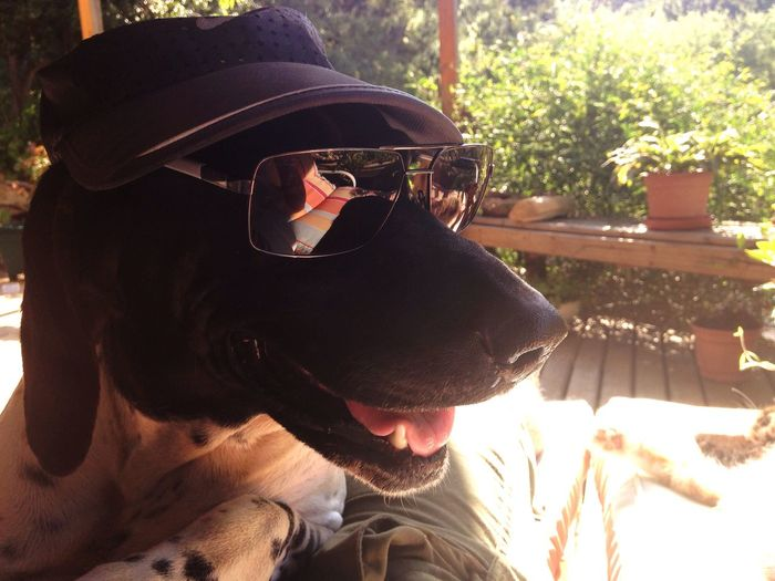 Dogslife Doglover Dog Sunglasses Fashion Cool Dog