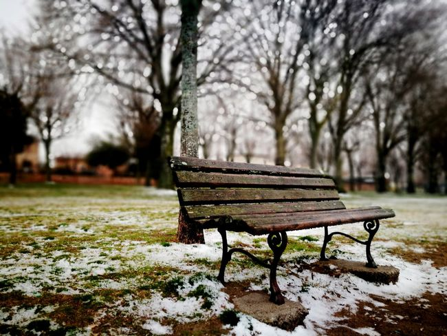 Tree Seat Relaxation Empty Absence Bench Close-up Sky Grass Park Bench Snow Covered Woods Snowcapped Bare Tree