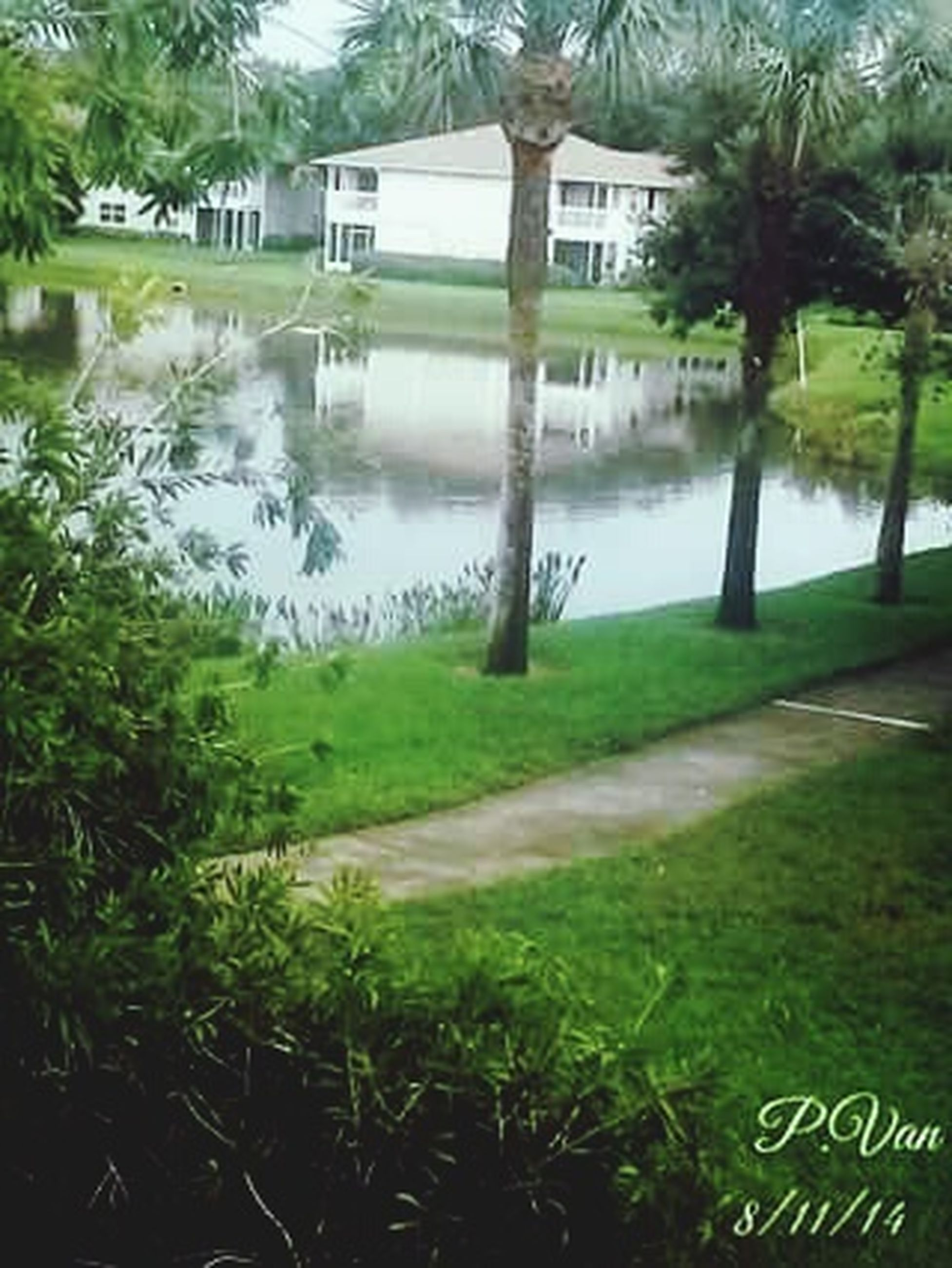 water, grass, tree, lake, river, built structure, green color, growth, plant, nature, reflection, architecture, tranquility, day, park - man made space, pond, outdoors, building exterior, no people, beauty in nature