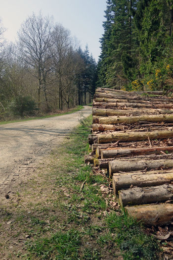 logging Country Grass Logging Natural Path Road Stack Wood Countryside Day Forest Land Landscape Logpile Logs Lumberjack Nature No People Outdoors Plant Side Of Road Sky Track Tree Woods