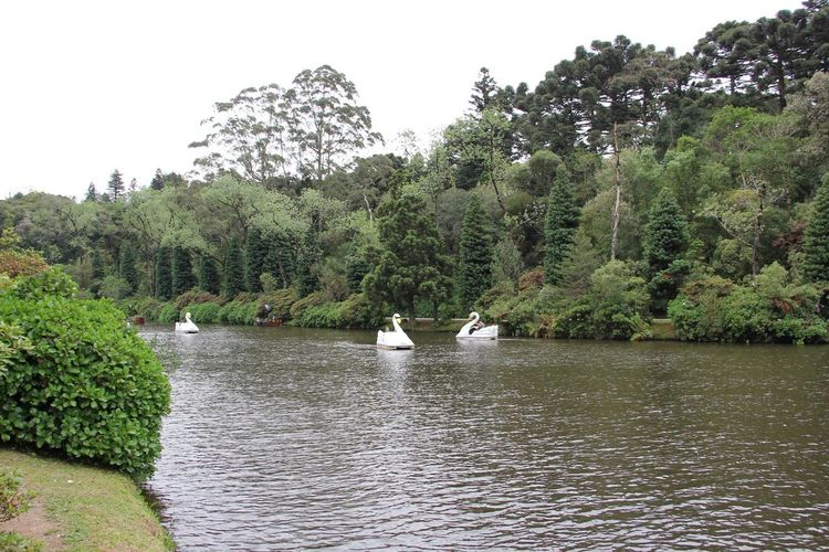 #Brazil #gramado Animal Themes Animals In The Wild Bird Day Growth Nature No People Outdoors Sky Swan Swimming Tree Water Water Bird