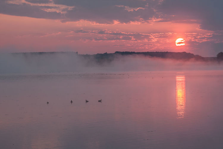 Federsee Animal Themes Animals In The Wild Beauty In Nature Bird Cloud - Sky Day Fog Foggy Morning Nature No People Outdoors Reflection Scenics Sky Sun Sunset Tranquil Scene Tranquility Water