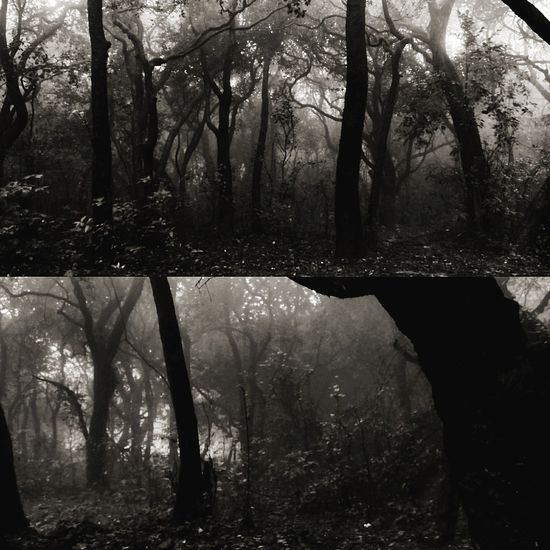 Tree Forest Nature Fog Outdoors Tree Trunk WoodLand Water Landscape Beauty In Nature Foggy Morning Foggy Weather No People Tree Area Haunted Haunted Photography Haunted Trees Perspective Ghost Ghostly Black And White Photography Horror Photography Horror Horror In Nature Horror Imagery