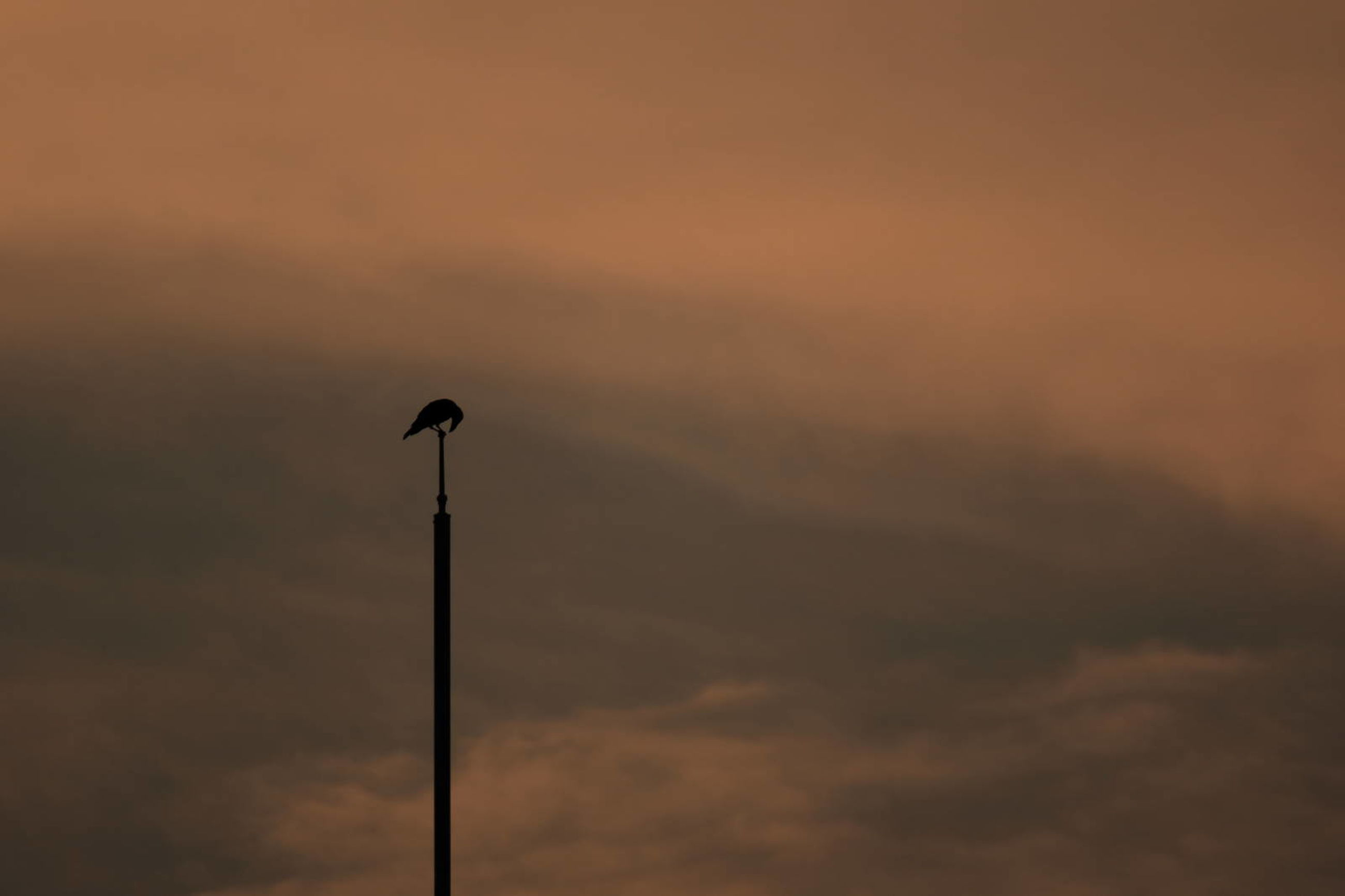 sky, sunset, cloud - sky, silhouette, low angle view, lighting equipment, street, no people, street light, beauty in nature, orange color, nature, scenics - nature, technology, outdoors, bird, vertebrate, tranquility, pole, animal themes, electrical equipment