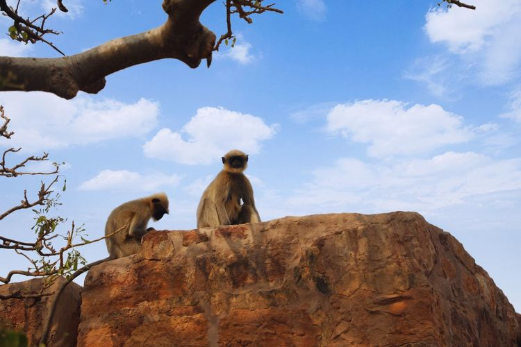 Low angle view of monkey sitting on rock against sky