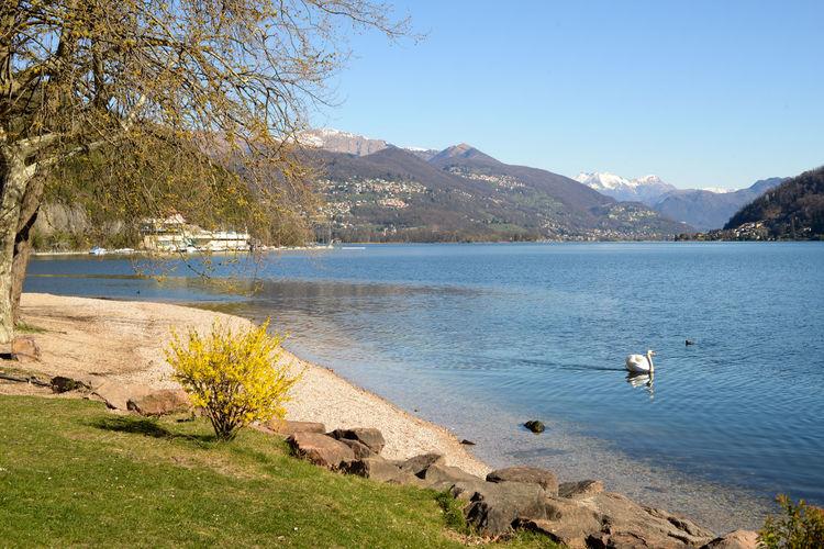 Lake Lake Ceresio Lugano Lake Water Mountain Scenics - Nature Animal Themes Vertebrate Animals In The Wild Tranquility Animal Beauty In Nature Bird Animal Wildlife Tranquil Scene Nature Sky Day No People Mountain Range Tree Outdoors