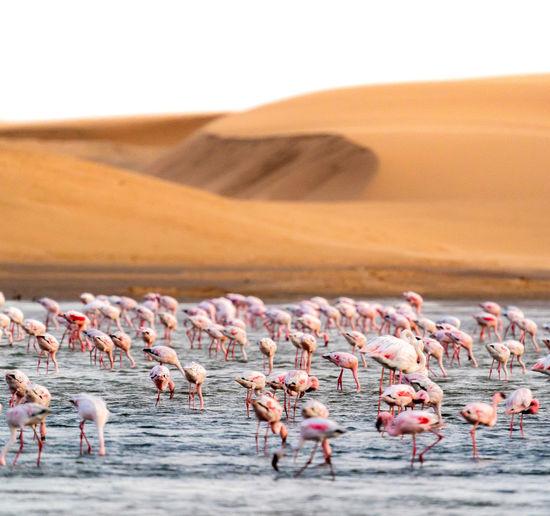 Flock of birds on lake against sky
