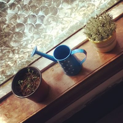 Good-morningGoodmorning Plant Green