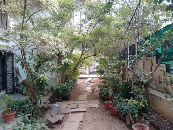 #birds #Dark #Garden #home #sweet #home #trees Beauty In Nature Day Growth Nature No People Outdoors Plant Tree