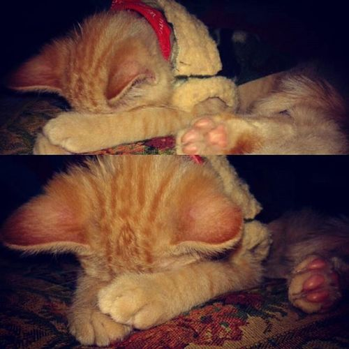 Clamente Catlovers Cats Animal Animalslover Gato Cute Pets Iloveu  Tuto Durmiendo Dormir Sleep Night Noche Amor Teamo Tierno Gatitos Gatitoslindos
