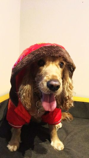 maya Pet Clothes Pet Canine Hat Clothing Animal Sticking Out Tongue