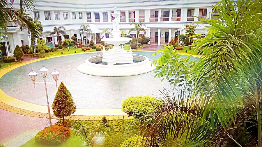 Astonishing Beauty of Nature sighted in the Garden Inside the Malolos Capitol of Bulacan in the Philippines. Nice Atmosphere Peace . Tree Concep Of Nature Think Green