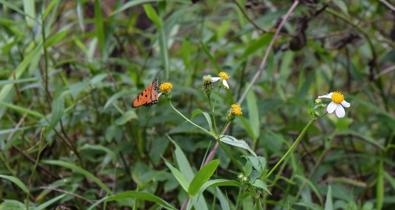 flower, growth, nature, fragility, plant, petal, outdoors, day, green color, flower head, freshness, beauty in nature, leaf, no people, insect, animal themes, blooming, animals in the wild, one animal, yellow, grass, close-up