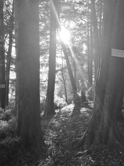 Black & White Friday Forest Tree Sunlight No People Nature Day Outdoors Beauty In Nature Black & White