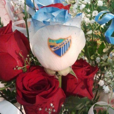 Rosa axul natural con el escudo del malaga tatuado en el petalo, una de nuestras originalidades de nuestra web de flores a domicilio www.graficflower.com visitanos y sorprendelos. Floresazules Rosasazules Ramoderosas Regalos Regalosdecumpleaños