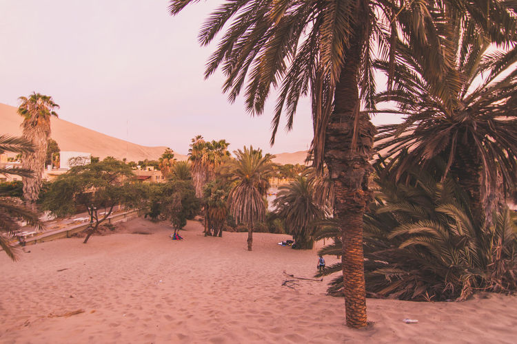 Tourists And Palm Trees On Sand In Desert