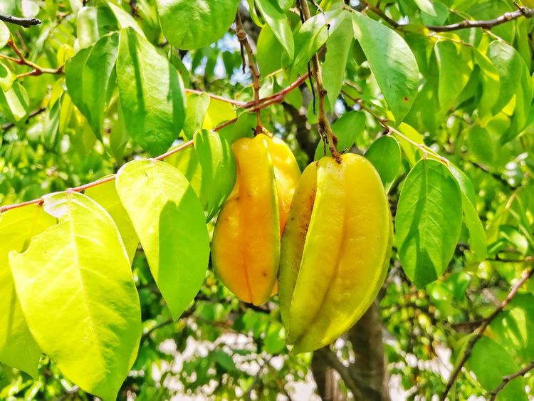 Freshness Growth Plant Nature No People Star Fruits Jucie Sweet Food Healthy Eating Exotic Fruit Tropical Fruits