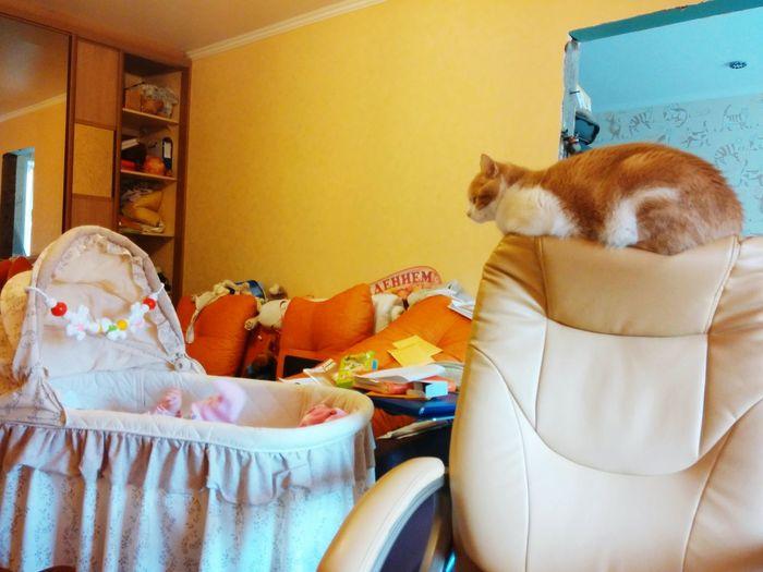 нянька кот следит за дочкой Cat Babysitting