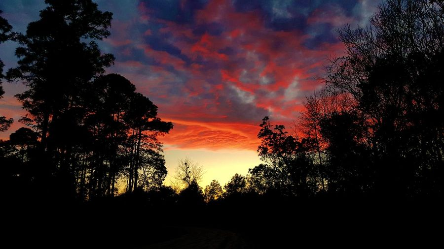 Sunset in the woods Smartphonephotograhy Smartphone Photos Samsung Galaxy Note 5 Woods Sunset Sky And Clouds Sunset Treeline Blood Sky