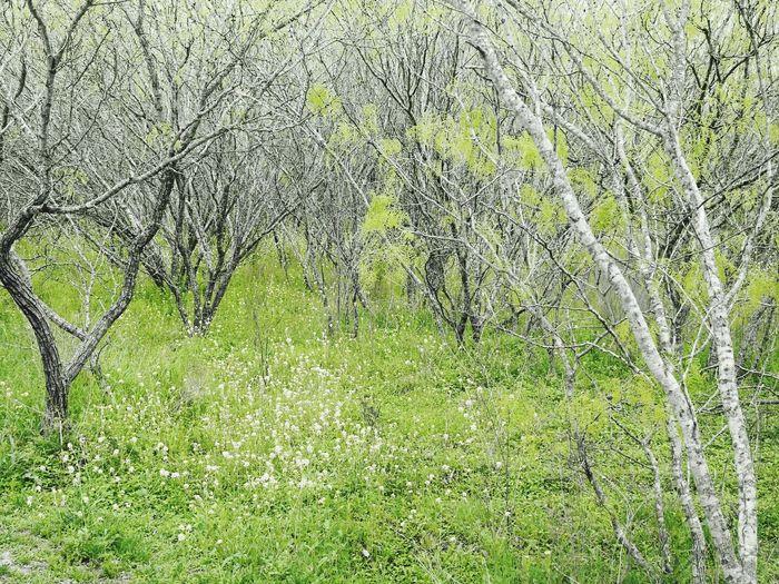 Mesquite Forest Commanche Lookout Park