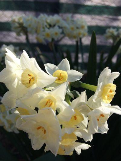 Flower Springtime