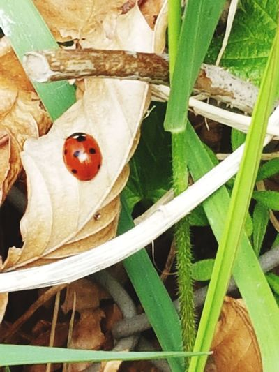 Ladybug🐞 Grass Leaf Branches And Leaves Branch Wood - Material Close-up Fallen Leaf Leaves