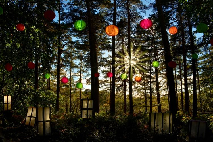 Halloween preparations Tree Hanging Lighting Equipment No People Outdoors Multi Colored Decoration Forest Lantern, Halloween Sunset Evening,
