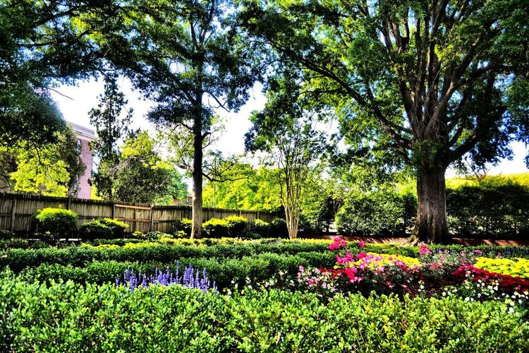 View of flowers in park