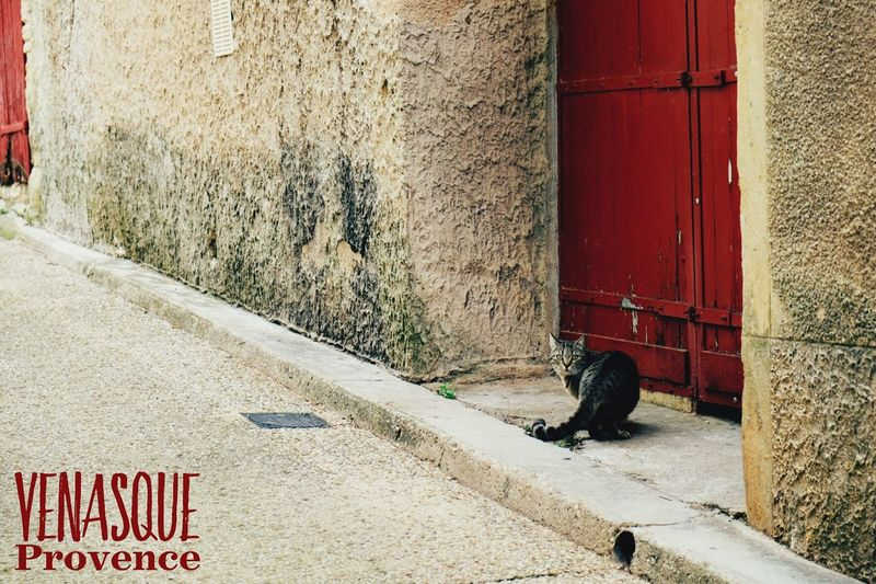What's On The Roll Cat Cat On The Door Provence Red