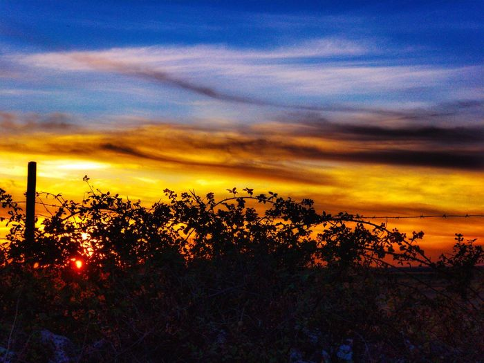 Sunset Nature Beauty In Nature Sky Scenics Cloud - Sky Tranquil Scene Growth Tranquility Silhouette Dramatic Sky Environment Sunset_collection Sunset Silhouettes Dehesa Sun Sunlight Plant Tree Landscape Field Love Romantic Orange Sky Rural Scene The Week On EyeEm