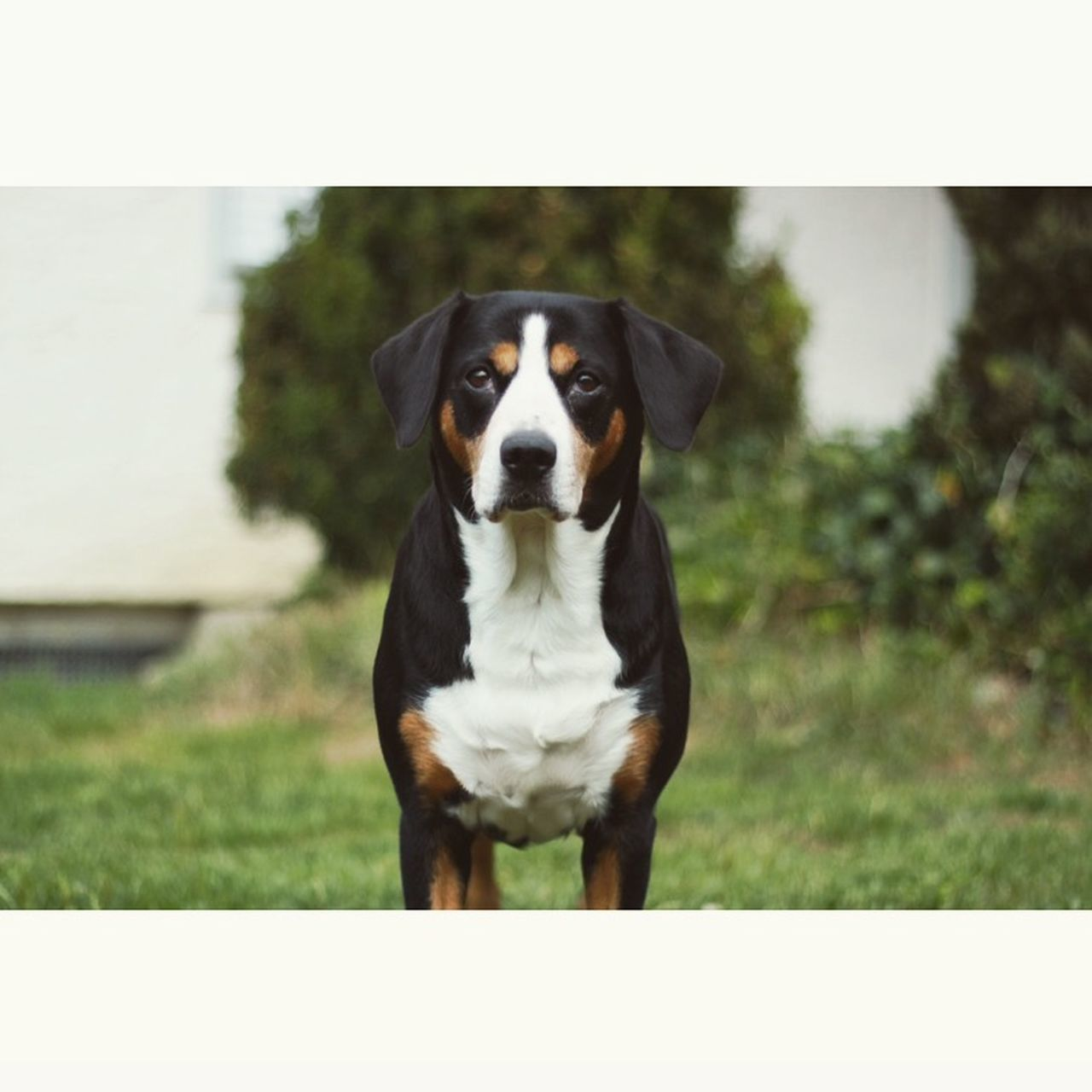 one animal, dog, domestic animals, pets, animal themes, day, outdoors, no people, focus on foreground, looking at camera, mammal, grass, standing, sitting, portrait, close-up