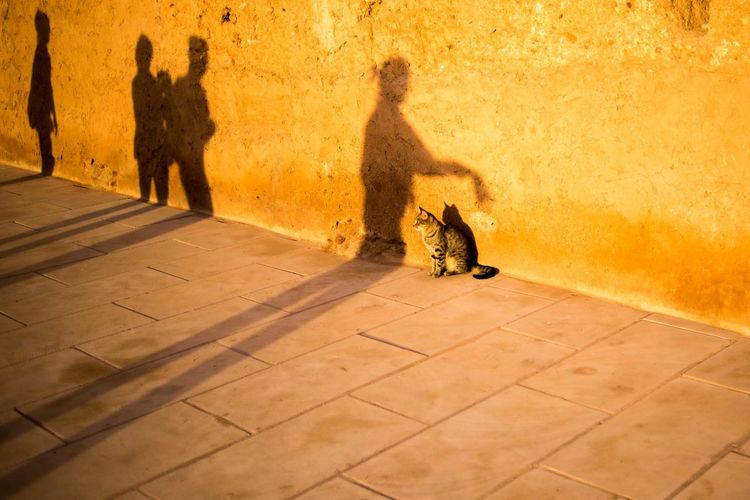 Cat On Footpath By Wall With Shadows During Sunset