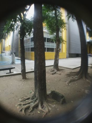 Tree Outdoors Day No People Fresh On Eyeem  New Talents EyeEmNewHere Building Exterior Building And Trees Fish-eye Lens Adapted To The City