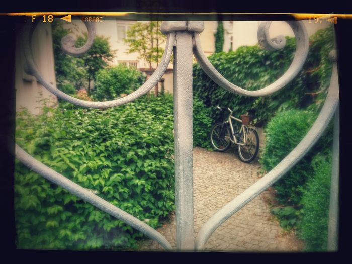 Bicycle in a Garden. Sport Time Relaxing