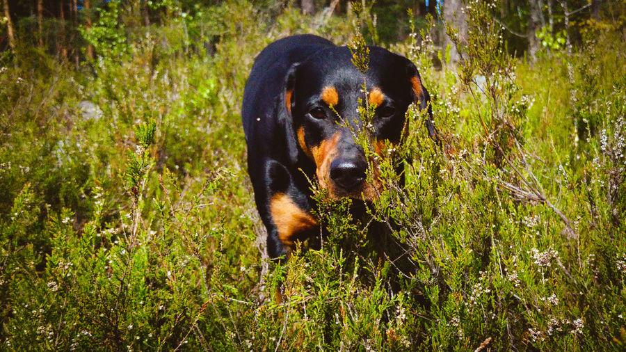 Hope ❤️ ©️JaniVauhkonen One Animal Animal Themes Mammal Grass Animal Wildlife Animals In The Wild Outdoors No People Nature Day Domestic Animals LGG4 JaniVauhkonen Best Shots EyeEm
