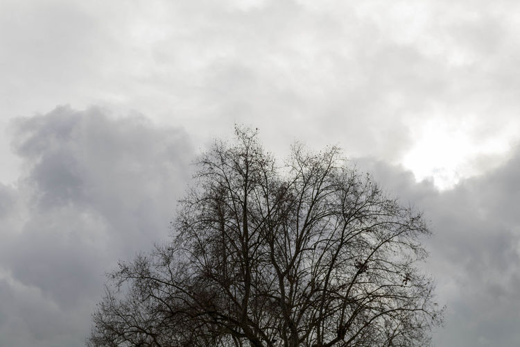 EyeEm Best Shots EyeEm EyeEm Best Pics Eye4photography  Close-up Tree Sky Cloud - Sky Low Angle View Bare Tree Nature Branch Beauty In Nature Outdoors Tranquility Scenics - Nature Treetop Overcast Silhouette Cloudy EyeEm Nature Lover