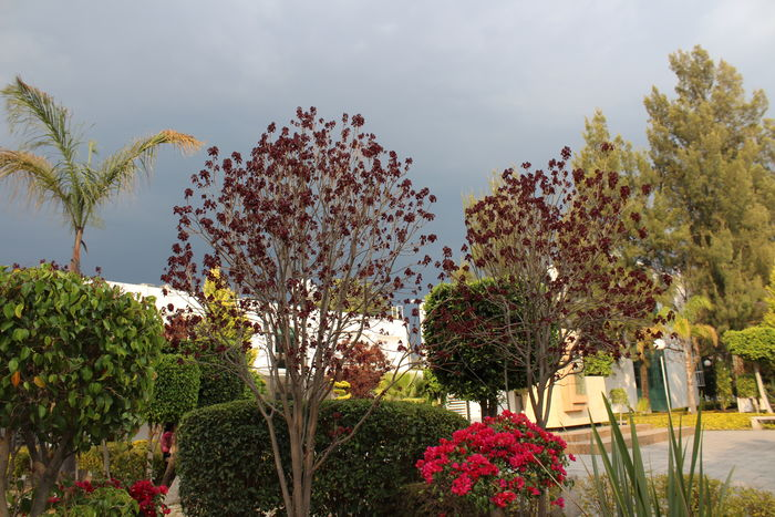 Cloud - Sky Contraste Contrastes Naturales Storm Cloud Tree