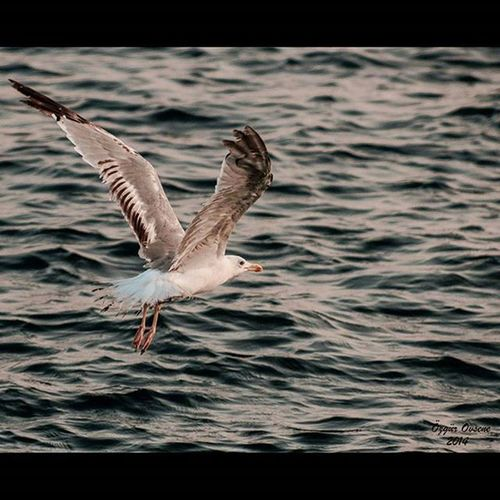 Birds Objektifimdenyansiyanlar Objektif Benimkarem benimkadrajim foto gununfotosu_ gununfotosu gununfotografi paşalimani paşalimanı paşalimanıadası pasalimani paşalimanıadası instafoto followme