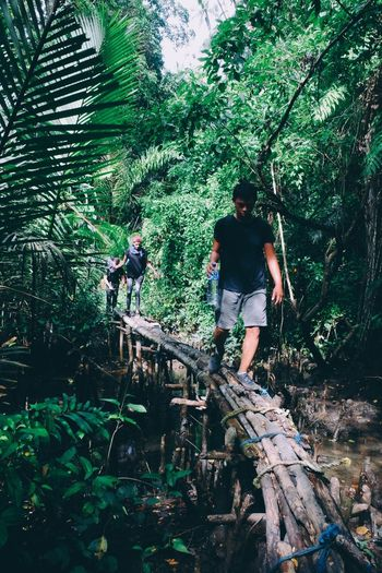 Java INDONESIA Rain Forrect Bridge Rain Forest Forrest Jungle Bridge Tree Forest Hiking Casual Clothing Nature Green Color Walking Lush Foliage Day Adventure Full Length Outdoors Growth Real People Two People Beauty In Nature Standing Men Togetherness Friendship An Eye For Travel