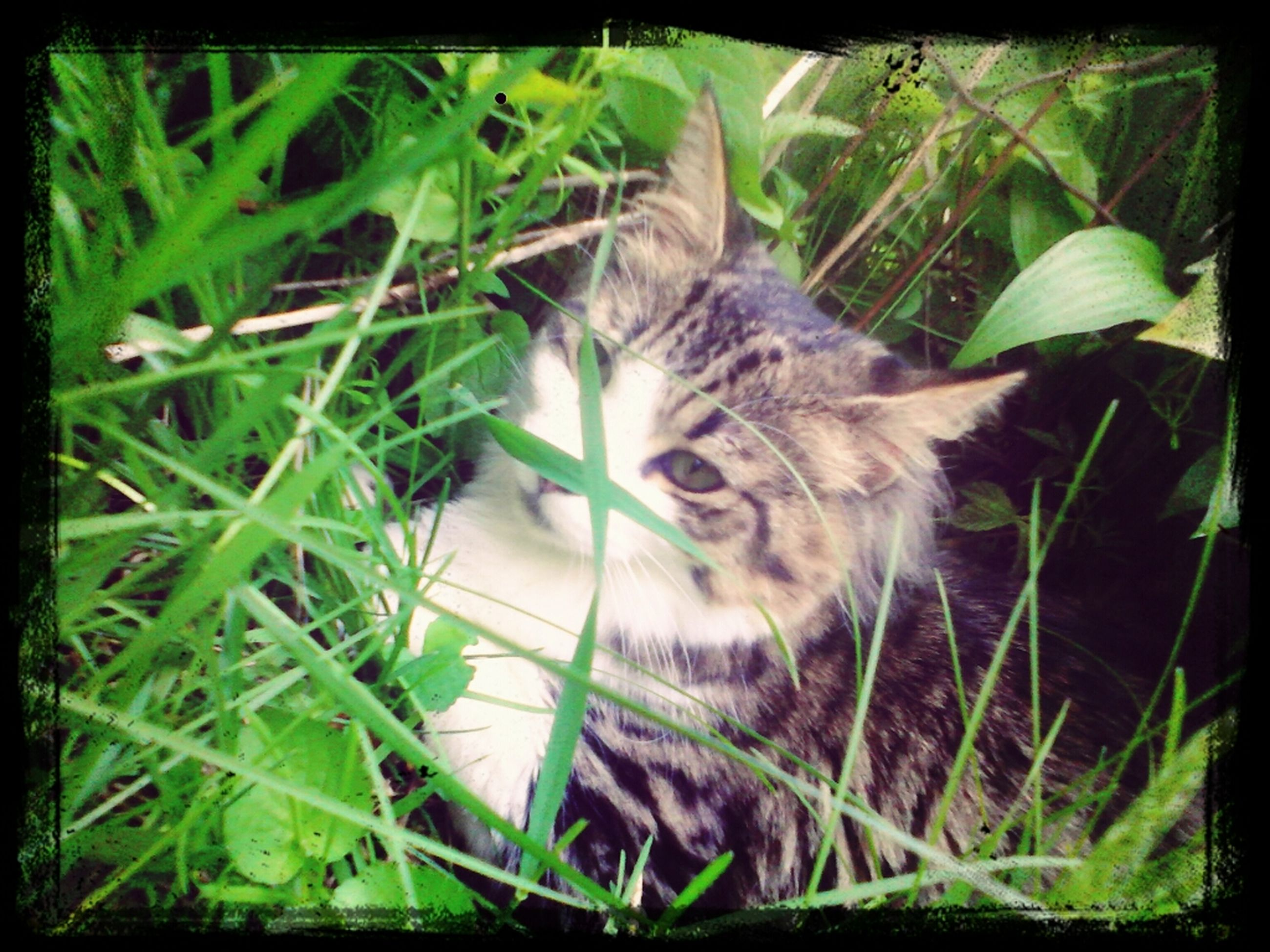 one animal, pets, transfer print, domestic cat, animal themes, mammal, domestic animals, cat, feline, auto post production filter, plant, relaxation, whisker, sitting, grass, lying down, resting, close-up, green color, growth
