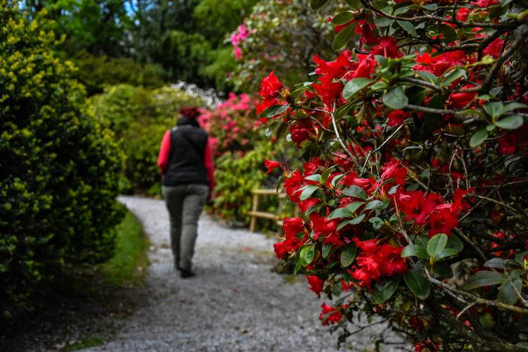 Rear view of woman walking on footpath by flowering plants