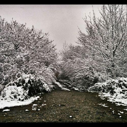 ساری Nexus5 Snow