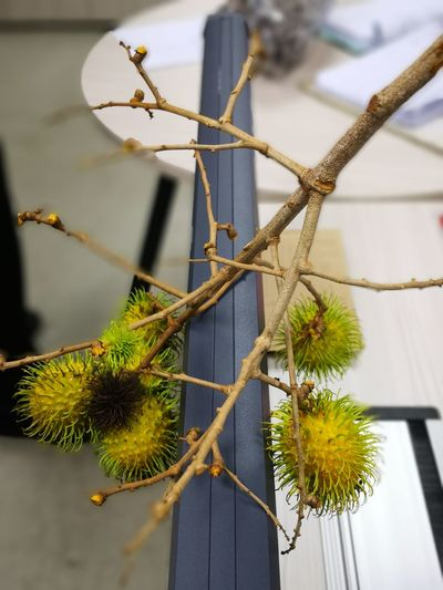 Rambutan Fruit Offce Dairy Product No People Outdoors Day Close-up Tree Nature trunks