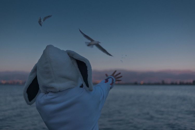 NikonD810 男仔很忙 Water Flying Vertebrate Sea Bird Sky Animal Wildlife Animals In The Wild One Person Rear View Nature Real People Group Of Animals Sunset Beauty In Nature Seagull Hood - Clothing