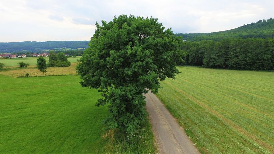 Landscape in germany Baum, Landschaft, Weite Drohnenbild Felder, Feldweg Field Grass Landscape Landschaft, Nature Outdoors Tree Treelandscape Wiesen