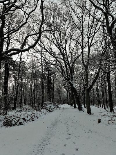 Tree Scenics
